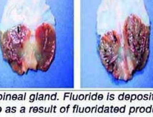 This Ingredient Can Protect Your Brain From Fluoride Damage